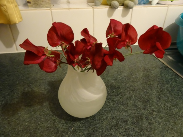 cuttings of some sweet peas in a small vase