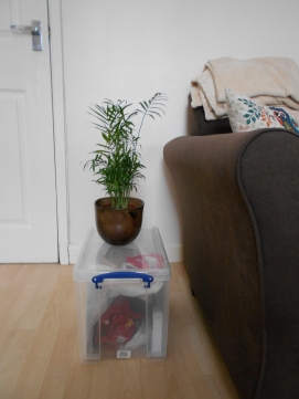 Parlour Palm on top of my plastic storage box next to settee