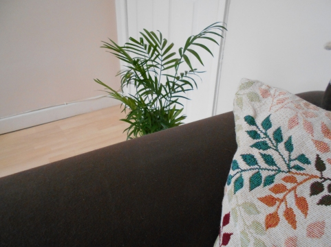 parlour palm next to my settee