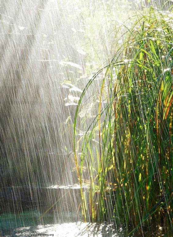 Visual of the image is that of heavy rain with the sun shining and pouring on a plant up against a rock wall.
