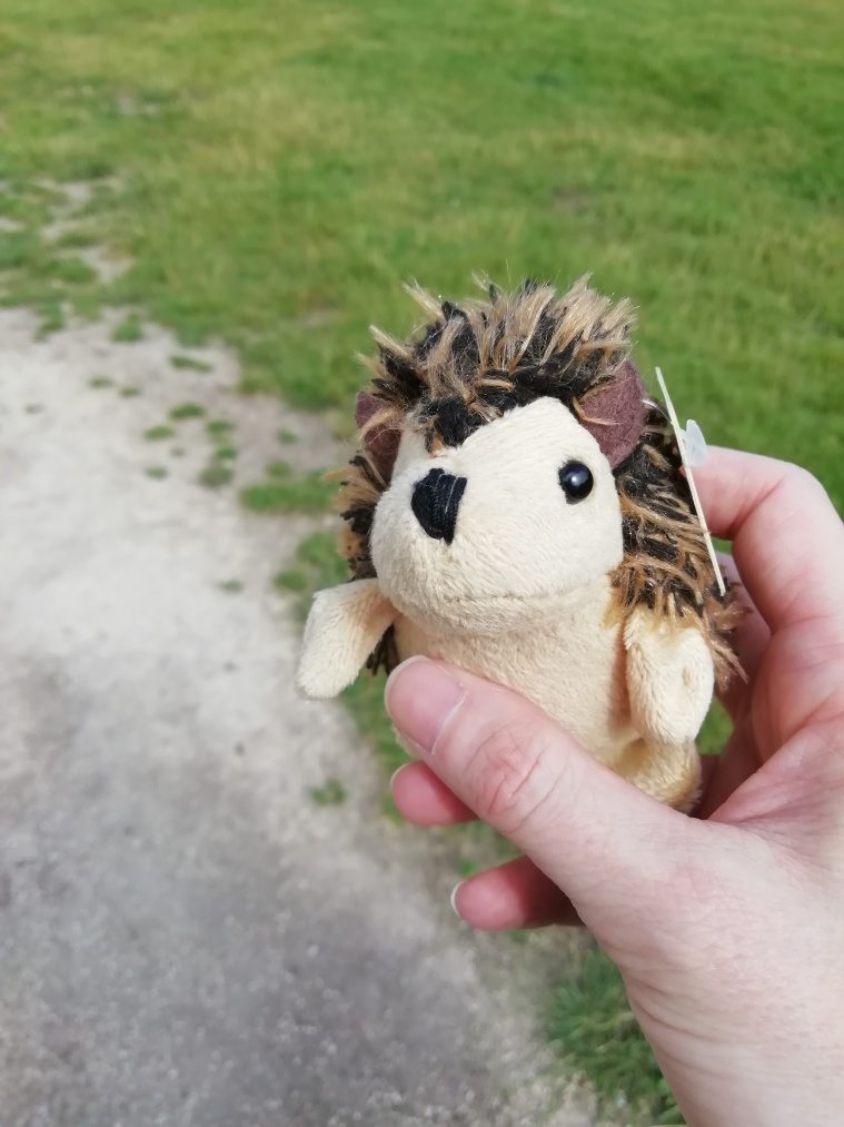 Small hedgehog toy