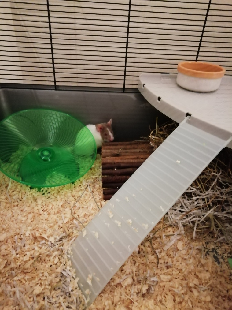 My hamster in it's cage.